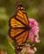 O jardim de borboletas