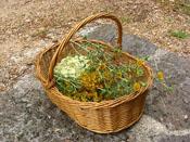 Aprofitament d'herbes i flors