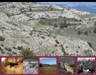 VI Actes La pastura a la muntanya mediterrània: gestió i patrimoni