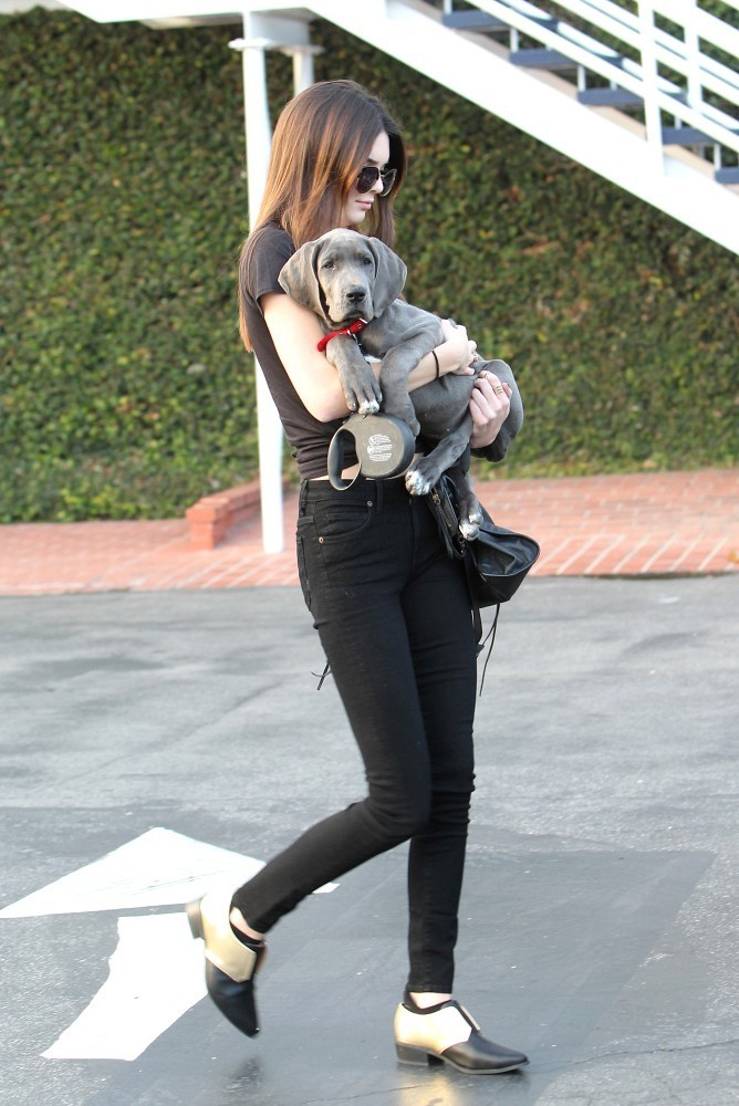 Kendall Jenner Photos The Jenner Sisters Take Their Dog