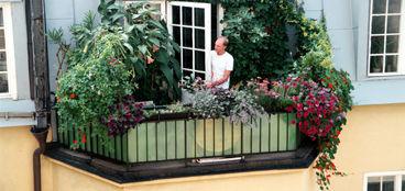 Bildresultat för odla i balkonglådor