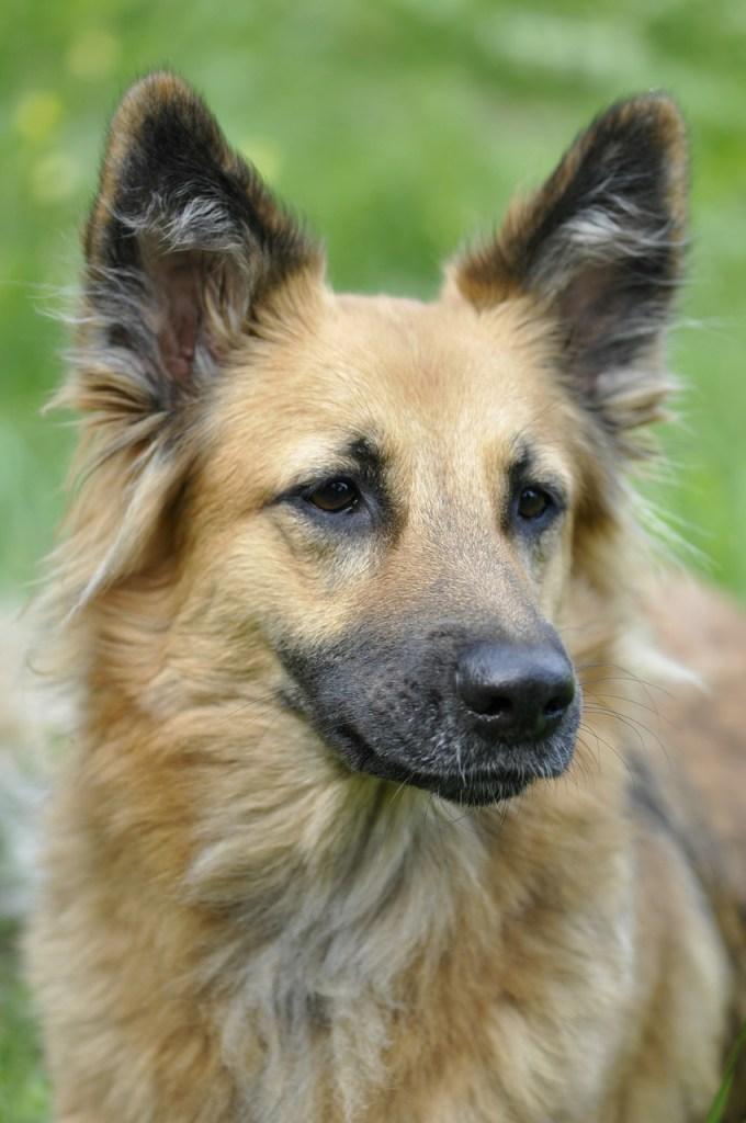 dog, animal, portrait