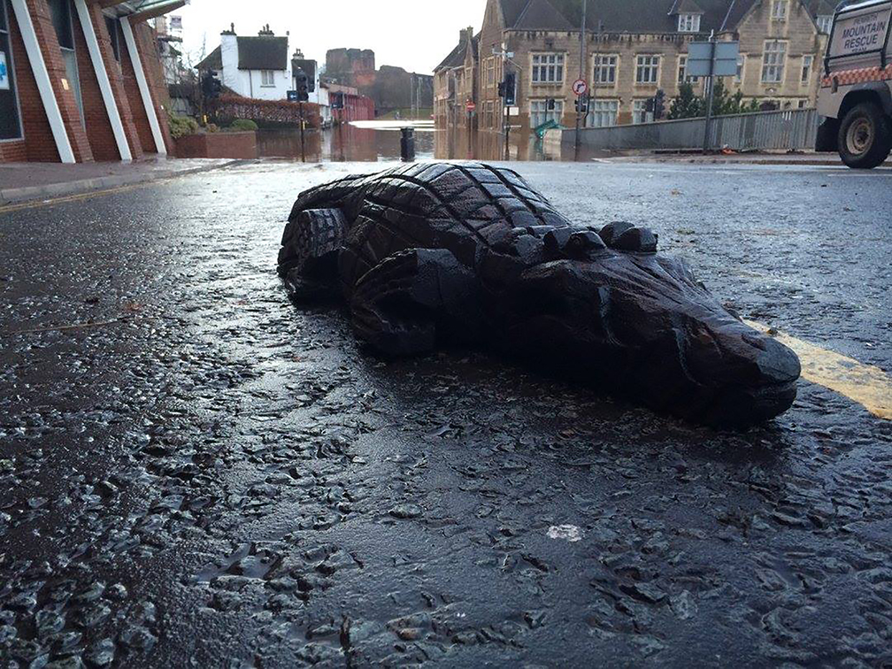 Desmond the crocodile/alligator Carlisle floods 2015