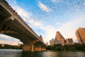 Congress Street bats