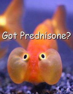 crohns-meme-prednisone