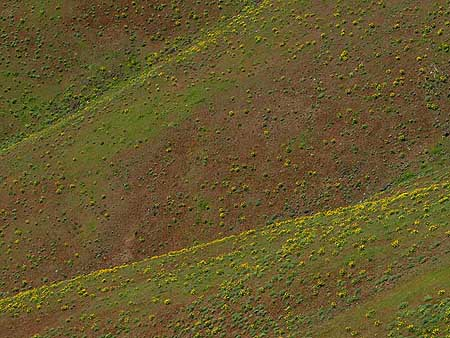 Miles of balsamroot create a brief dusting of bright green and yellow on the desert slopes of the Eastern Gorge each spring