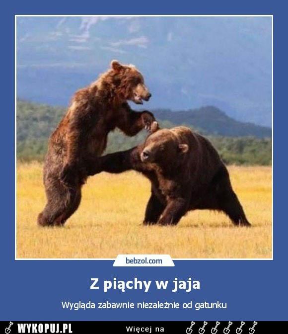 Memy Z piąchy w jaja - Wykopaliska z internetu. Memy, śmieszne Gify,  Demotywatory. I pełne humoru Obrazki i Żarty