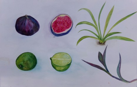 Fruit and plants, watercolour by AnneMarie Foley