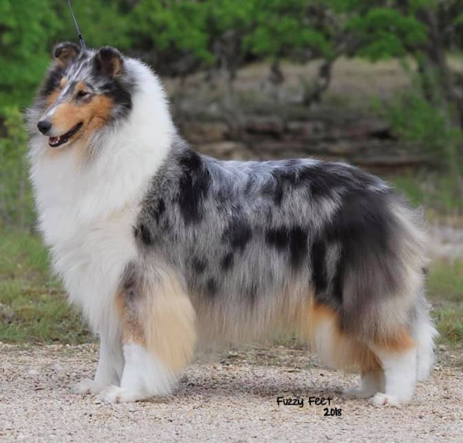 GCh. Maverick Painted Lady