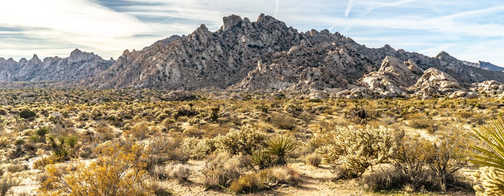 Campground Review: Mojave Preserve