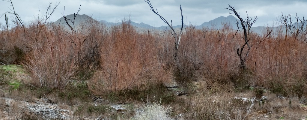 Desert Days: Wildlife Refuge