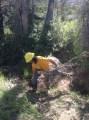 Sam pulling invasives