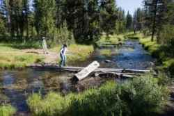 Hiking through Shoshone National Forest