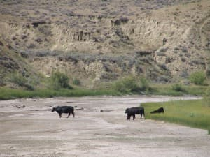 The Powder River sometimes runs dry in this arid region of northeast Wyoming. (Dustin Bleizeffer/WyoFile — click to view)