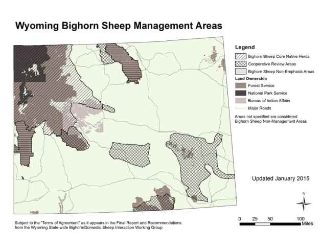 Bighorn sheep herds east and south of Yellowstone National Park are some of the healthiest and most abundant in Wyoming. Those living around Jackson and Dubois have been more troubled by pneumonia than their Cody-area cousins