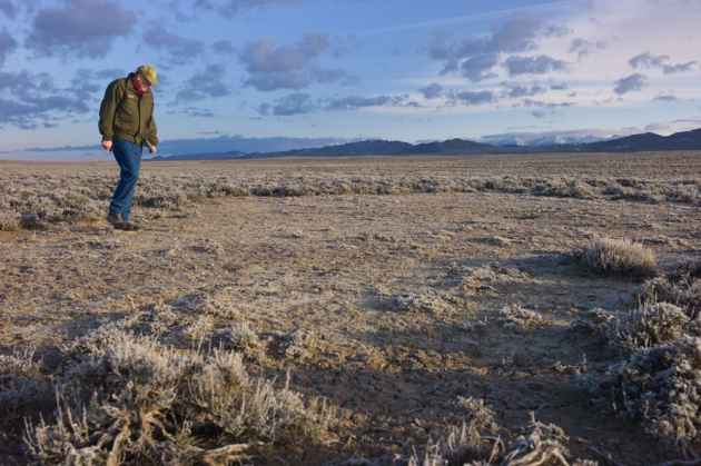 Wyoming Game and Fish Sage Grouse Coordinator Tom Christiansen inspects a site where greater sage grouse roost and sometimes strut in robust habitat his colleagues call the Golden Triangle. Game and Fish workers, federal employees, independent scientists and volunteers will survey about 1,000 grouse strutting grounds or leks across Wyoming this spring in an ongoing effort to document the status of the troubled bird. (Angus M. Thuermer Jr/WyoFile)