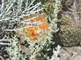 """Hidden Beauty in the Desert"" (Dava Martin)"
