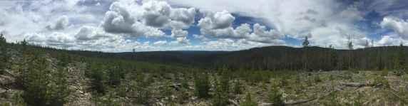 Medicine Bow National Forest. (Julia Robison)
