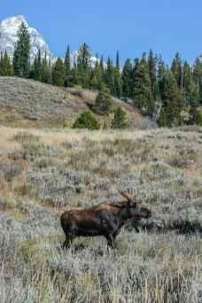 Grand Teton National Park. (Mike Reinhart)