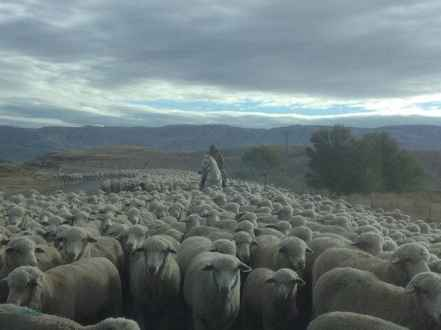 """Public Road ( lots of Sheep Shit)."" (Courtesy Rod Morrison)"