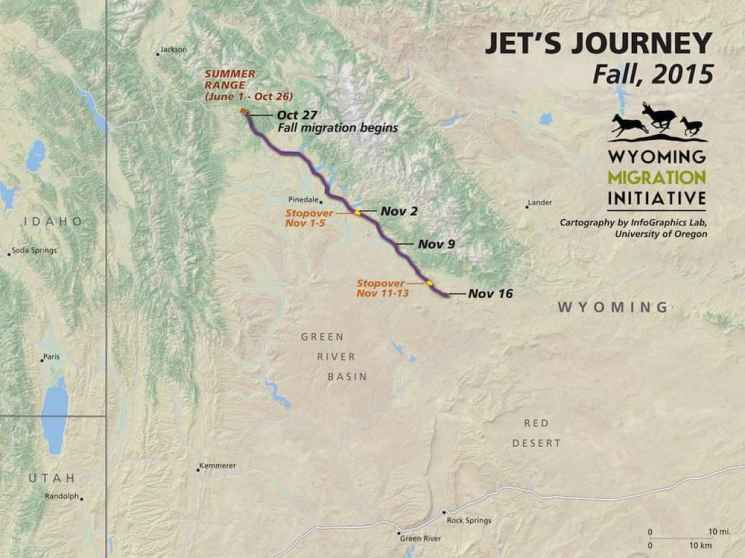 """A map of the migration route taken by """"Jet"""" the mule deer doe shows she traversed the entire Wind River Range in November. Data from her GPS collar —and those on many other deer — may inform conservation policy decisions. (Wyoming Migration Initiative)"""
