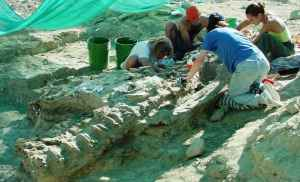 Excavators collecting an apatosaurus tail section at the Howe Dinosaur Quarry near Shell. (Photo courtesy of Cliff Manuel)