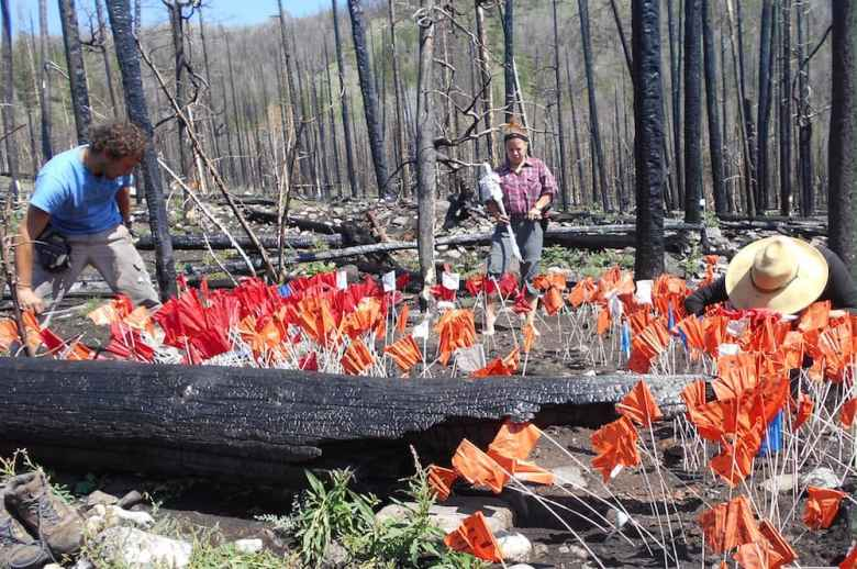 Flags mark artifacts unearthed after a wildfire. Fires can uncover hundreds of items. (Courtesy of Larry Todd)