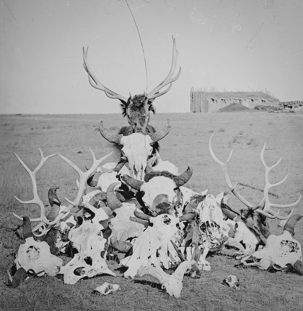 Buffalo, elk, pronghorn, deer, mountain sheep and wolf skulls and bones at Fort Sanders, 1870