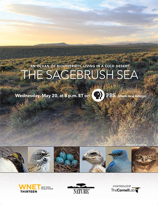 The Sagebrush Sea