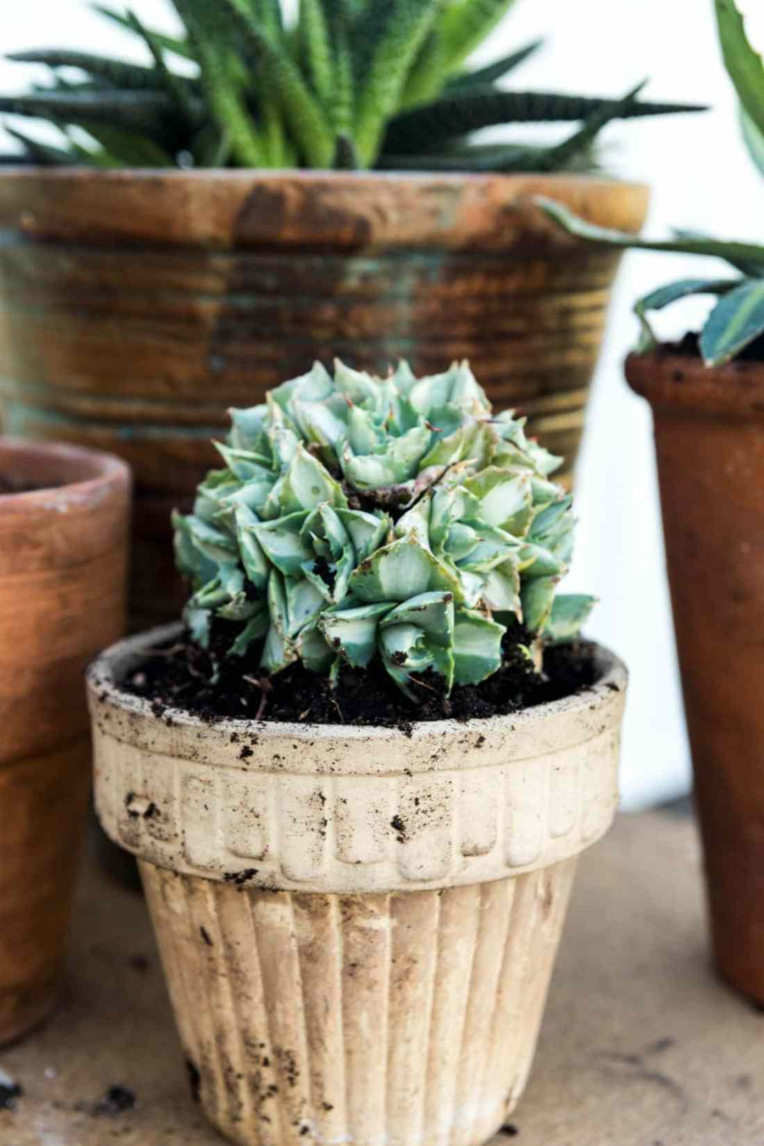 How to Split and Maintain Potted Plants | Wyse Guide