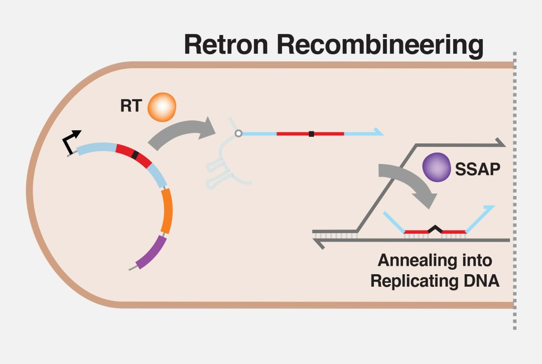Move over CRISPR, the retrons are coming