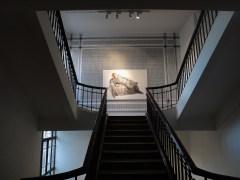 wystawowe zwierze 13. Istanbul Biennale, Turkey (18)