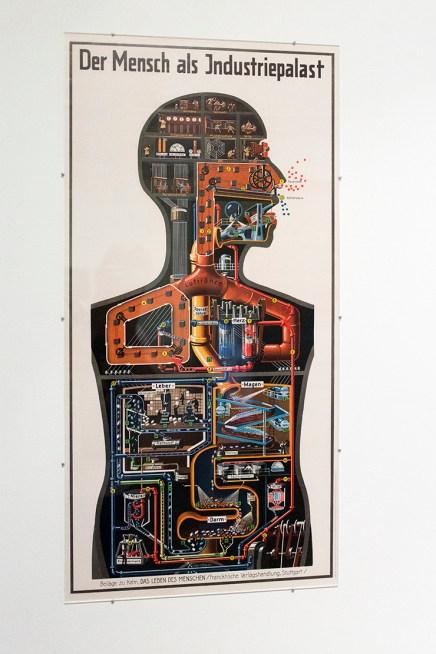 medicine-in-art-mocak-krakow-wystawowe-zwierze-18