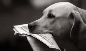 chien_journal