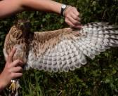 Obóz ornitologiczny dla wszystkich, i to nad górskim jeziorem!
