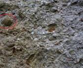 Skamieliny morskich zwierząt w Górach Kaczawskich? Jest ich sporo! Cała galeria!