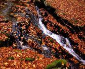 Kunčický potok i magia jesiennych barw [Rychlebské hory]