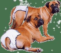 Pet odor and urine removal service