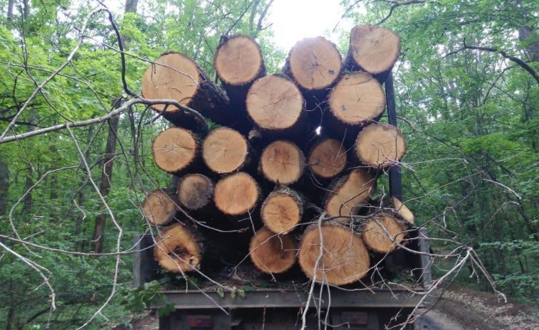 Вантажівки з незаконно спиляною деревиною виявили під  Харковом