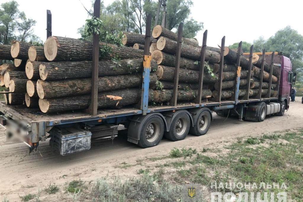 Силовики розслідують понад 140 проваджень за фактами незаконної порубки лісу