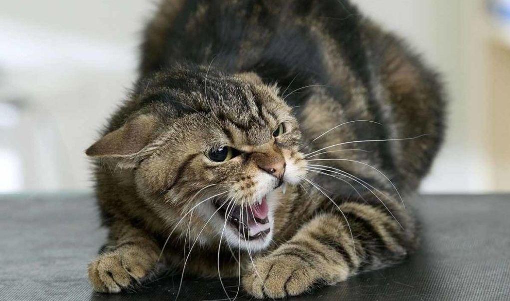 Домашні тварини почали частіше хворіти на сказ