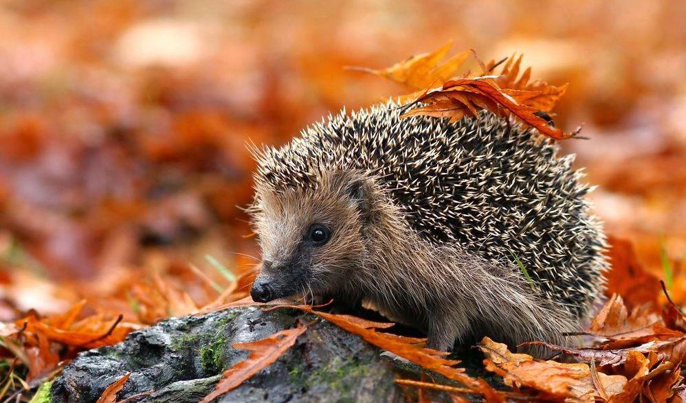 У жовтні прийде справжня осінь