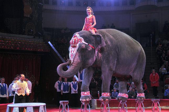 До Харкова прибудуть тварини з Національного цирку України