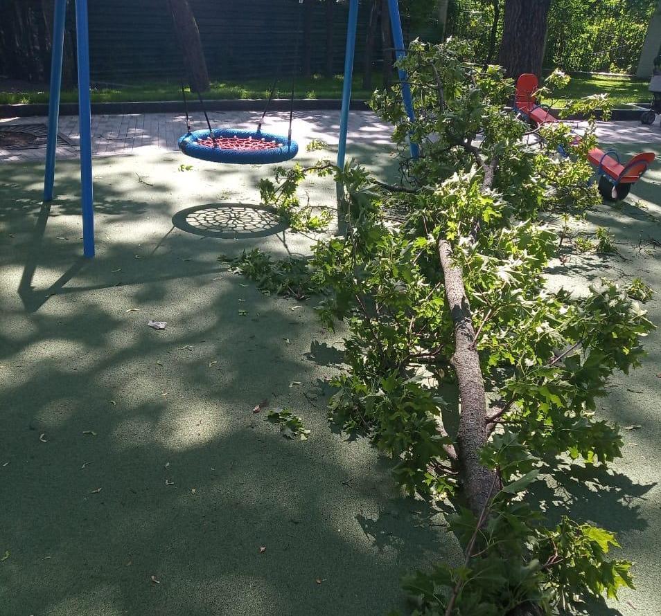 На дитячому майданчику на дитину впала велика гілка