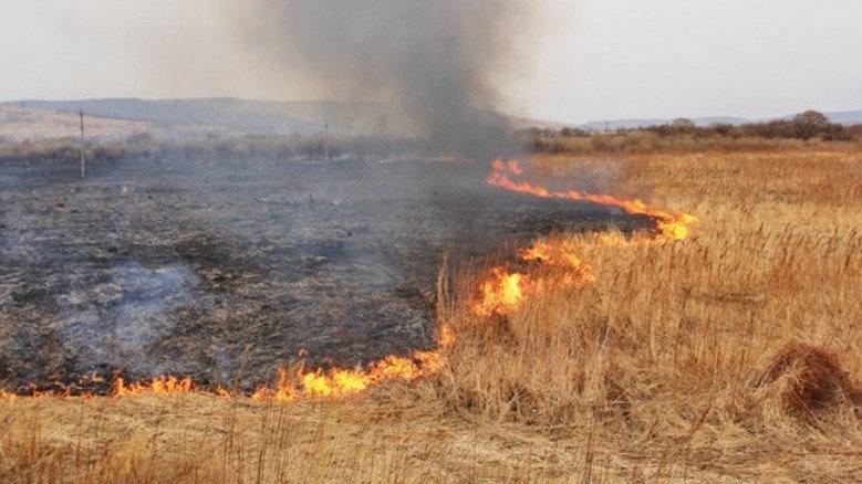 У Барвінківському районі горіло пшеничне поле