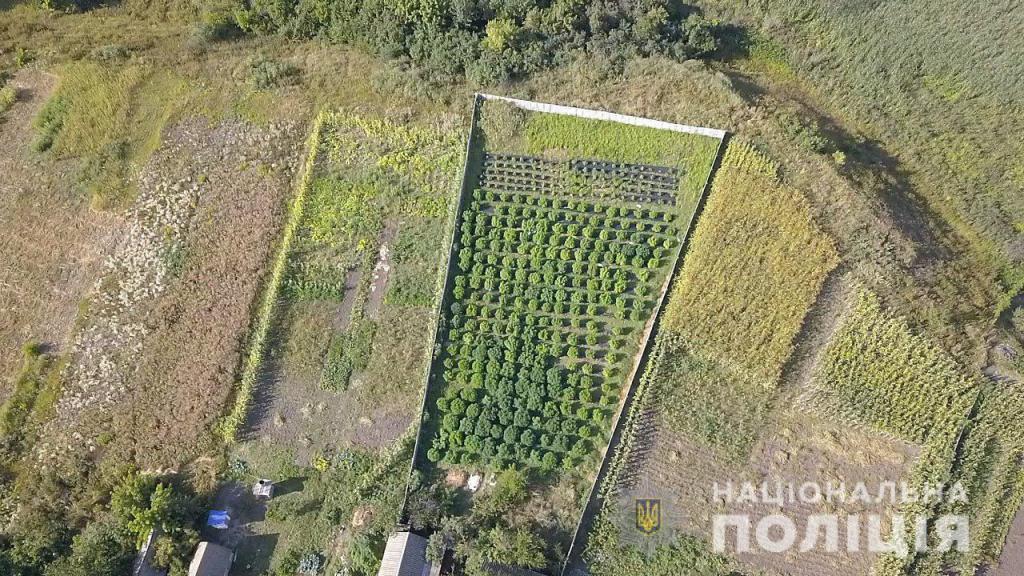 У Зміївському районі Харківщини знайшли плантацію наркорослин