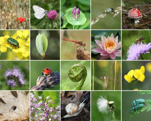 Інститут рослинництва збирає та зберігає генетичний матеріал рослин всього світу