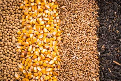 516a787-grains-and-oilseeds
