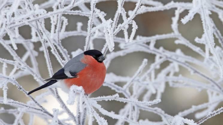 На Харківщині прогнозують морозний тиждень