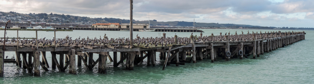 And by the way there are many cormorants in the harbour too, and these you do not have to pay for.